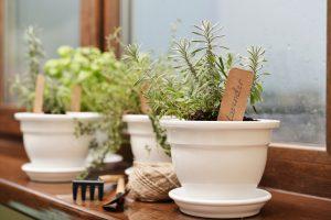 Les plantes répulsives font fuir les insectes