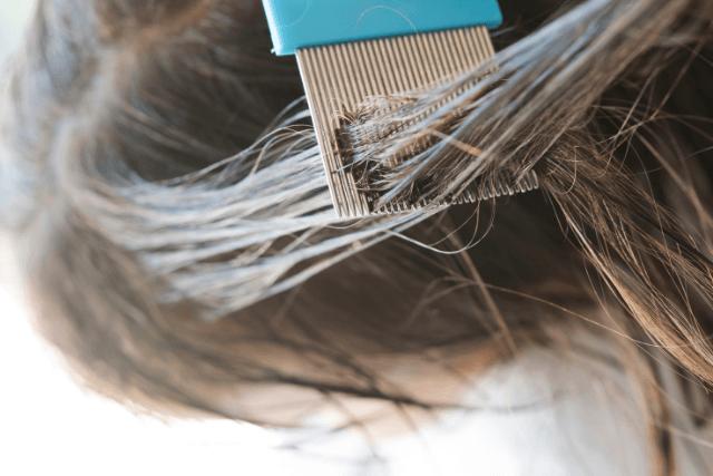 poux-peigneàpoux-traitement